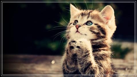 humble cat.jpg