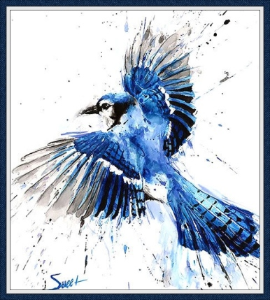 bluejay_border