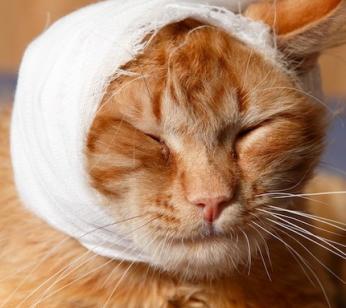 cat-in-bandage