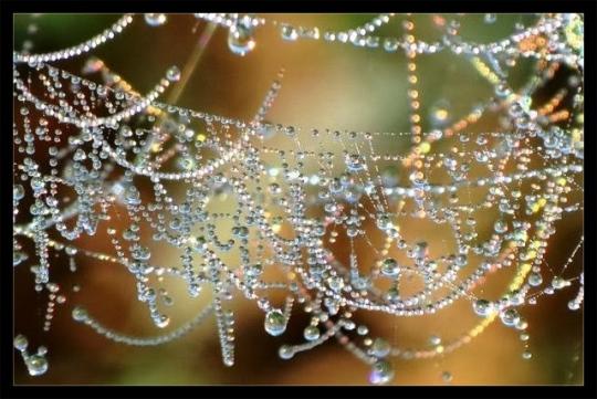 indrasweb-dewdrops