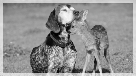 dog loving deer