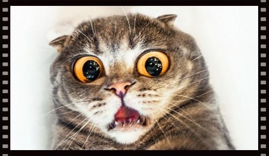 scardey cat.jpg